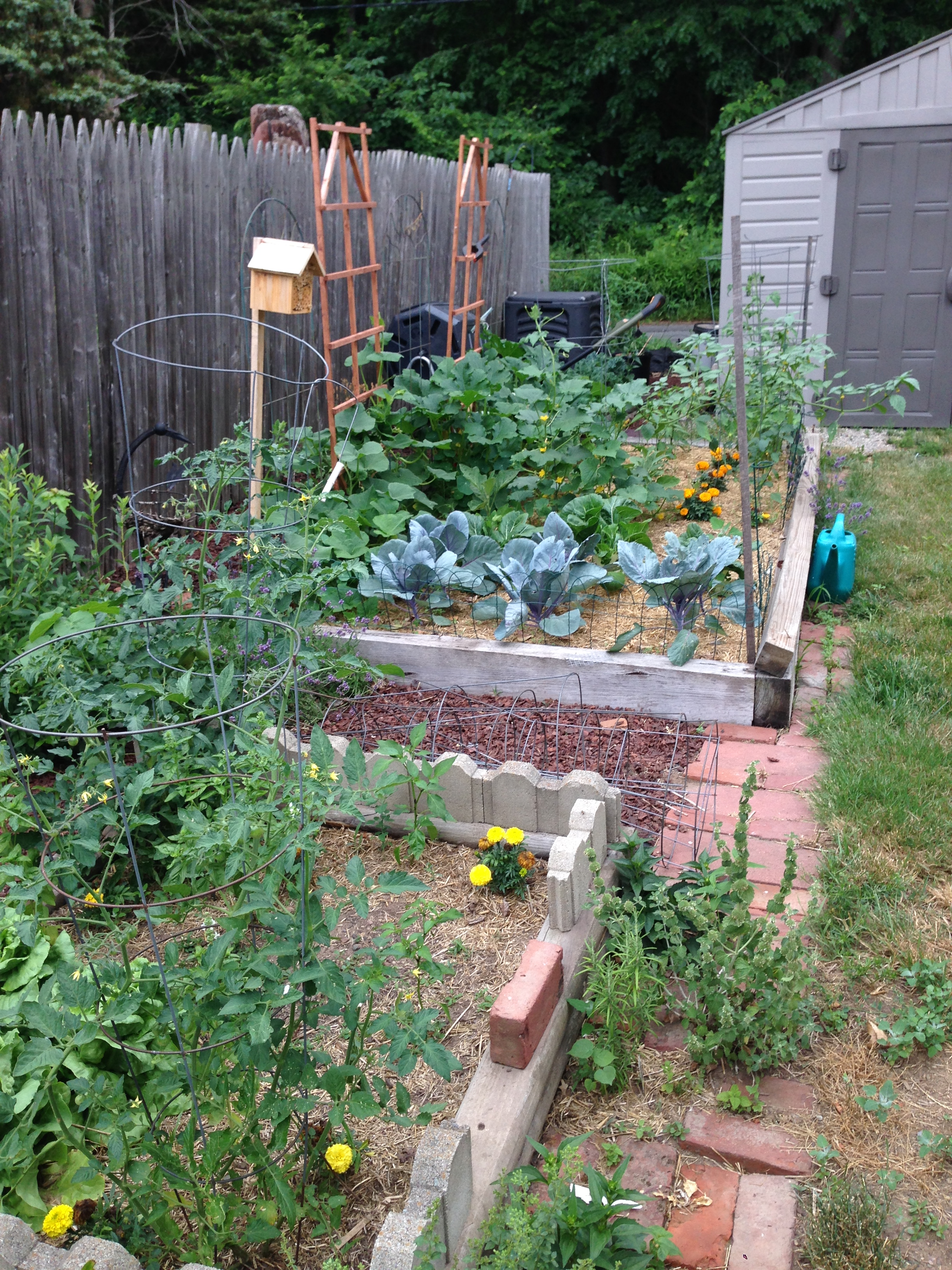 Two raised garndes beds with vegetables and herbs, and a compost pile.